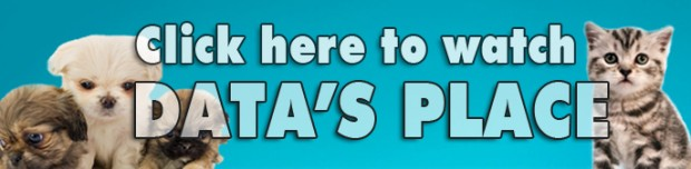 """""""Data's Place"""" Banner"""